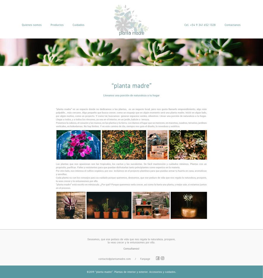"""Web de """"planta madre"""" Plantas de interior, cactus y suculentas. By La Vuelta Web"""